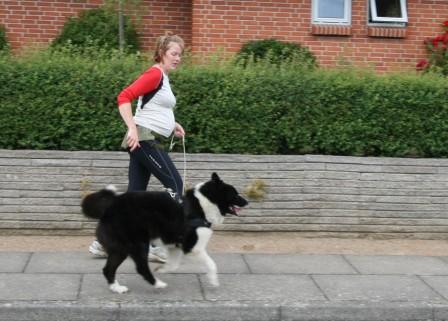 mig eller hunden størst sandsynlighed blive gravid